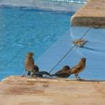 birds Fanadir drink and food