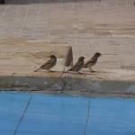 birds nice experience