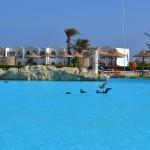 birds useful swimming pool_800x533