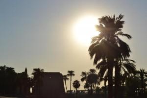 Palme in Luxor_800x533