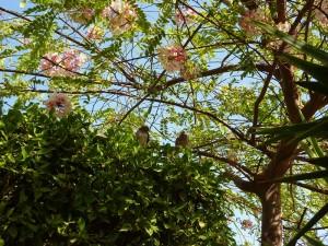 albero in Flamenco_800x600