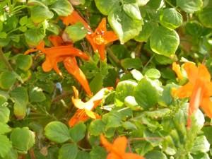 arancione_800x600
