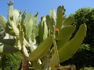 cactus_800x600