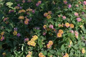 fiore arancione_800x533