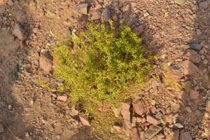 fiori nel deserto 1_800x533