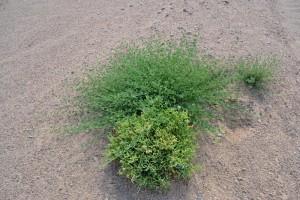 fiori nel deserto 2_800x533