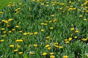 prato fiorito in Gorgonia reef_800x533