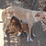 Mum dog tired_800x530