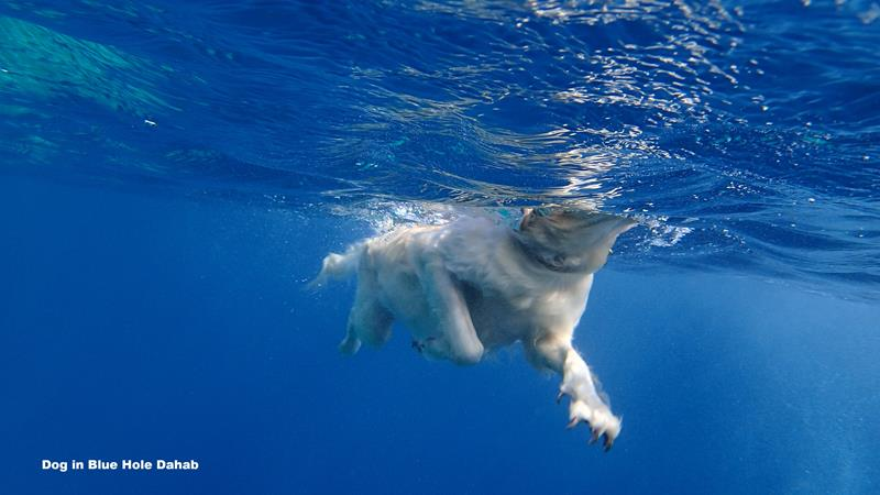 dog in Blue hole Dahab_800x450