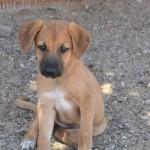 dog of Egypt_400x600