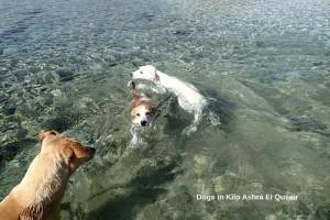 dogs of kilo ashra El Quseir_800x534