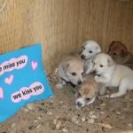 dogs_in_abu_sawateer[2]_800x533