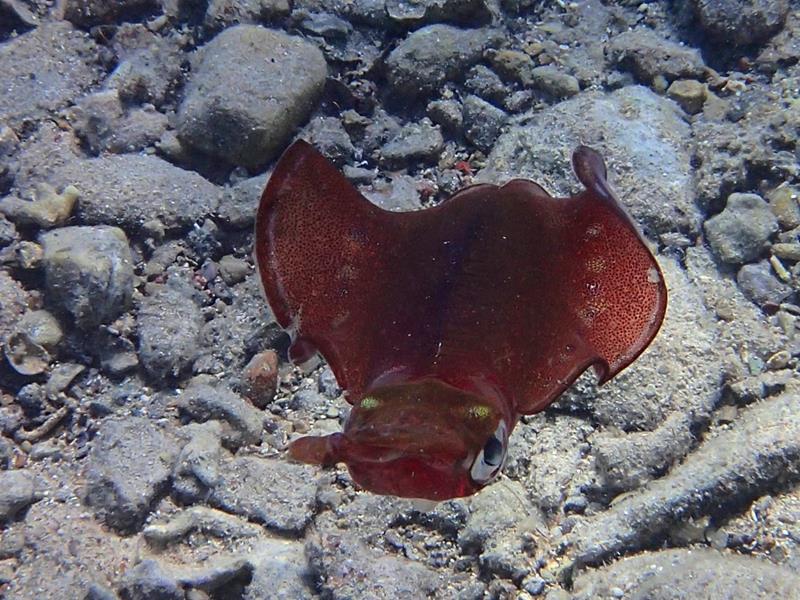 calamaro 1_800x600