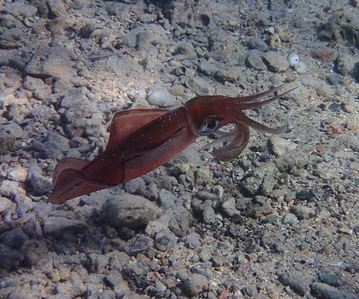 calamaro_721x600