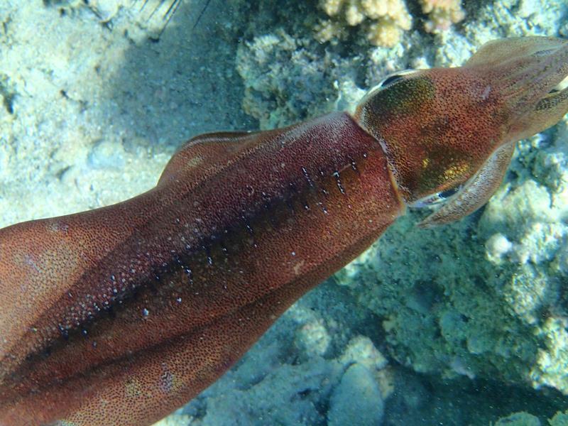 squid_800x600